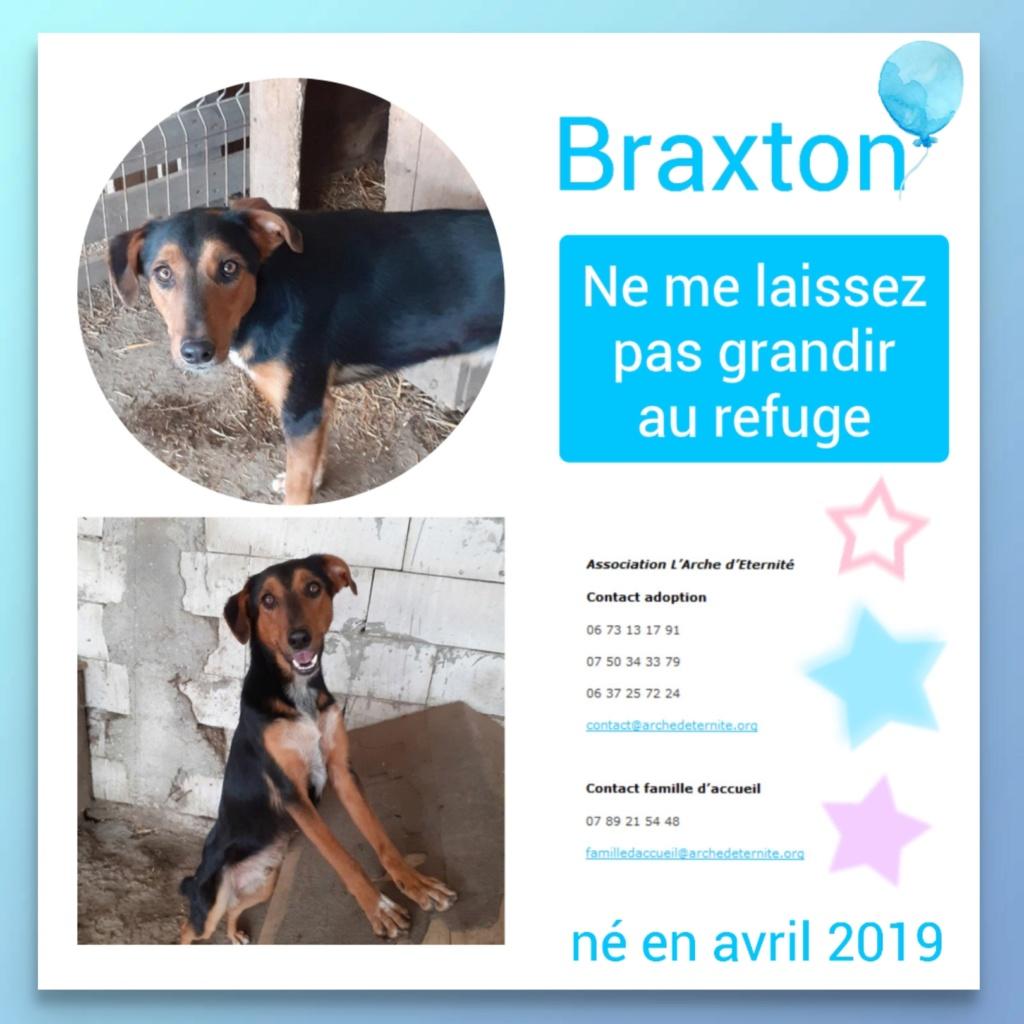 BRAXTON - né en 03/2019 amené par Oana avec sa fratrie - Parrainé par Dash2504 - R-SOS-SC Braxto12
