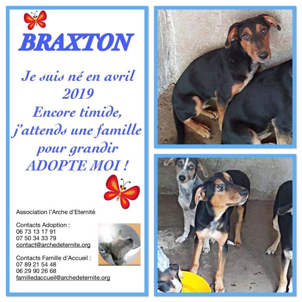 BRAXTON - né en 03/2019 amené par Oana avec sa fratrie - Parrainé par Dash2504 - R-SOS-SC Braxto13