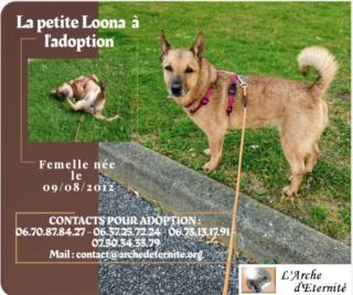 LOONA - femelle née le 09/08/2012, EN FA DANS LE 92 - sortie de l'équarrissage le 08/09/2020 - Parrainée par Sylvie H. SC-SOS-R-30MA- - Page 4 Captur10