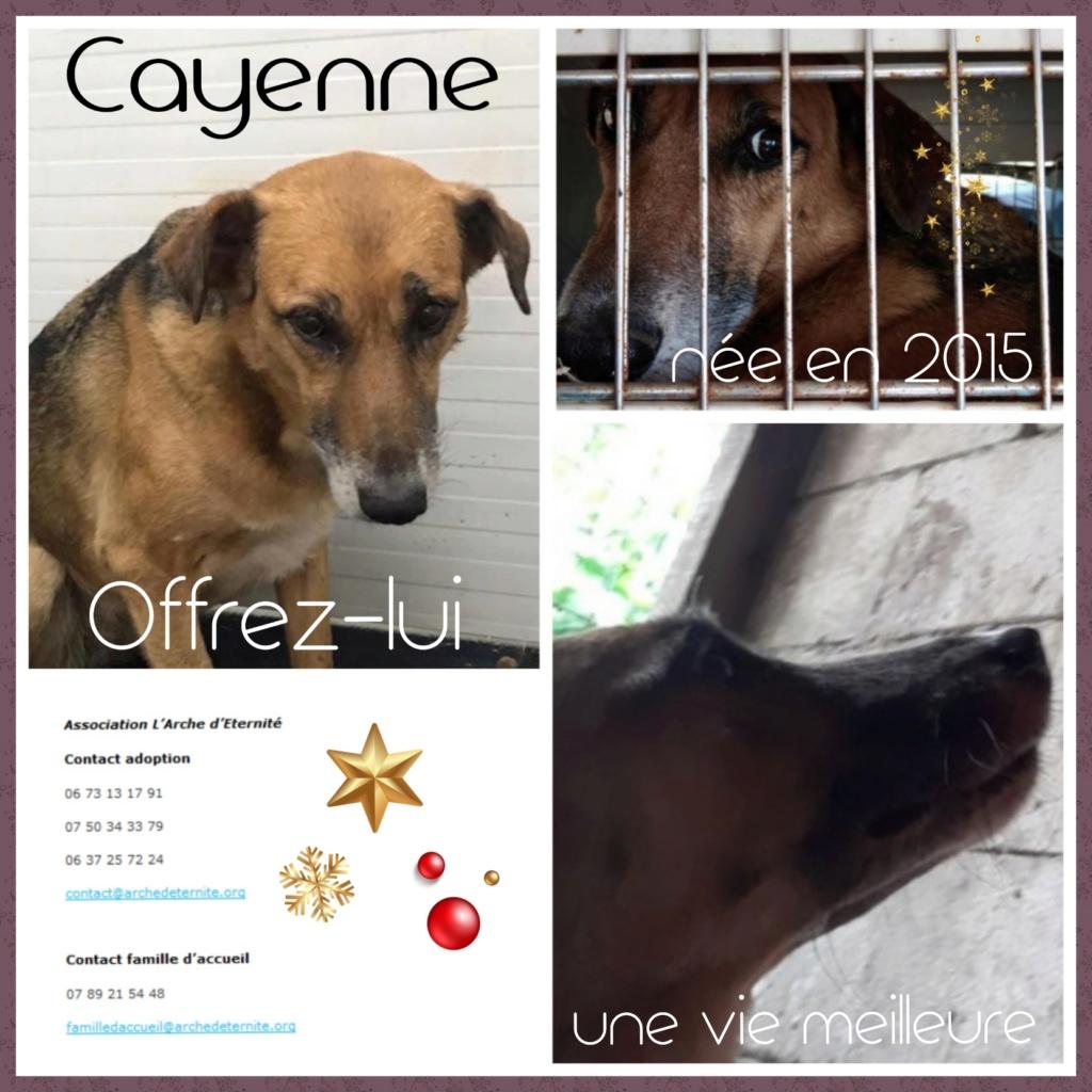 cayenne - CAYENNE, femelle, née en 2013 - SAUVÉ DE L'EQUARRISSAGE DE MIHAILESTI avec SEVEN - parrainée par NénéSC-SOS-R-SC Cayenn11