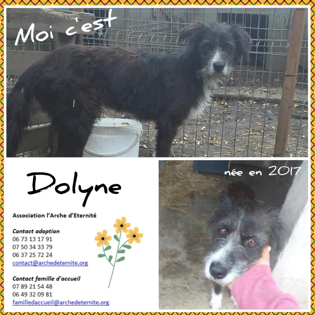 dolyne - DOLYNE, femelle née en 2017, FAISAIT PARTI DES 13 VENANT D'UN AUTRE REFUGE-R-SOS-SC Dolyne10
