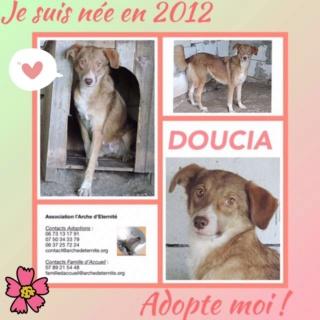 DOUCIA, née en 2012, sauvée de Mihailesti les 16 Avril 2018 - Marrainée par Elisabeth B-R-SC Doucia11