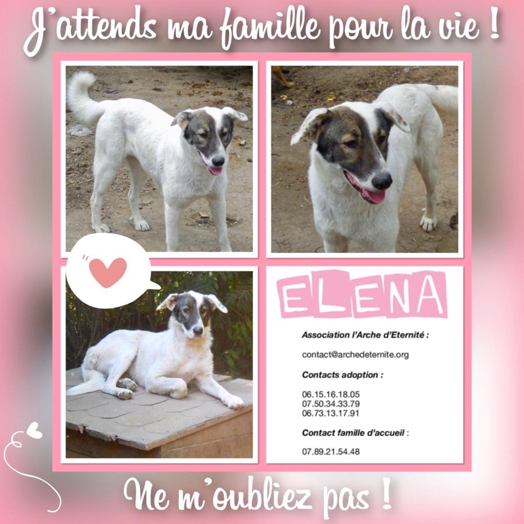 ELENA - femelle née en 2016 et ses 4 chiots sauvés de l'équarissage de BRAGADIRU - parrainée par Marguerite V. -R-SC-SOS- - Page 2 Elena11