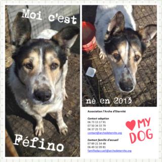 FÉFINO, né  en 2013 - Sorti de Mihailesti le 25 février - parrainé par Mimaoinikebou2021-R-SC-SOS Fefino13
