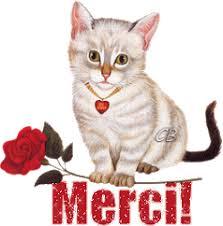 LOLLIPOPS, chatte tricolore née en 2019 - marrainée par Lilirez2 Images35
