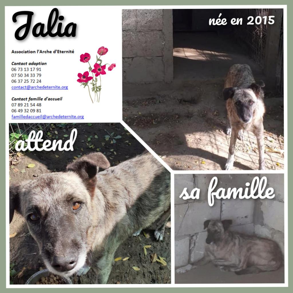 JALIA - Née en 2015 - trouvée errante- marrainée par Manganouchka - SC-R-SOS Jalia_10