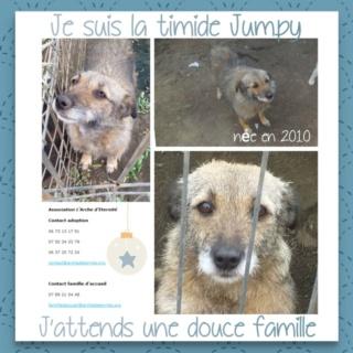 JUMPY femelle née en 2010- sauvé de l'équarrissage le 10/04/2014- parrainée par Edni94 -R-SC-SOS - Page 4 Jumpy14