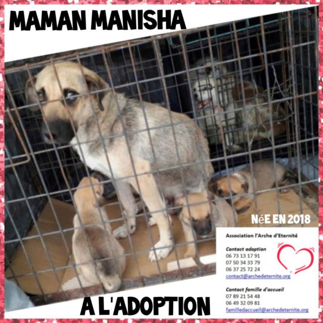 MANISHA née en 2018 - maman et ses 3 chiots sauvés de Mihailesti le 20/08/2020 - parrrainée par Coco65-R-SC-SOS Manish11