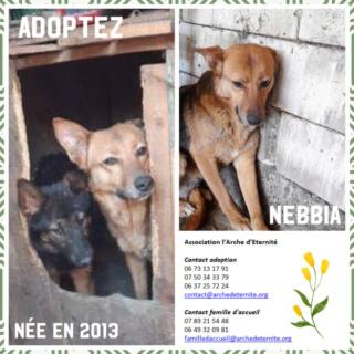 NEBBIA, née en 2013, récupérée chez un particulier avec sa fille LISSY - parrainée par Mirko78-R-SC Nebbia11