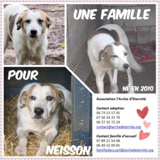NEISSON, mâle taille moyenne, né en 2010 , trouvé près de Bucarest - parrainé par Sylvie H-R-SC-SOS Neisso13