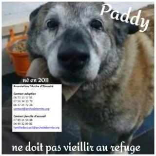 Paddy, né en 2011 - Sorti de Mihailesti le 25 février 2021 - parrainé par Coco65-R-SC-SOS Paddy10