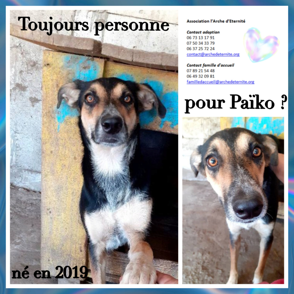 PAÏKO - mâle , né en 03/2019 amené par Oana - Parrainé par Carrat-R-SOS-SC Paiko_10