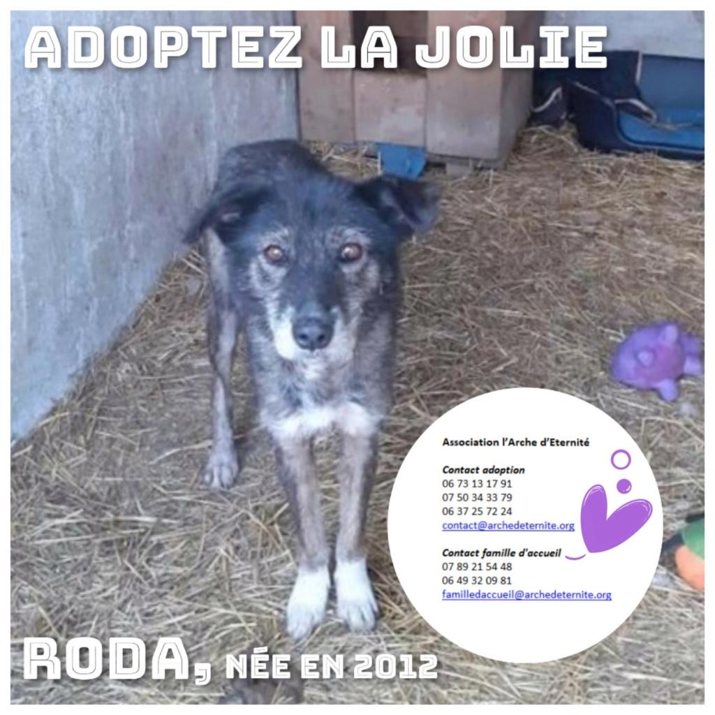 RODA, femelle de taille moyenne née en 2012, trouvée dans la rue - Parrainée par Manganouchka --R-SOS-SC Roda1010