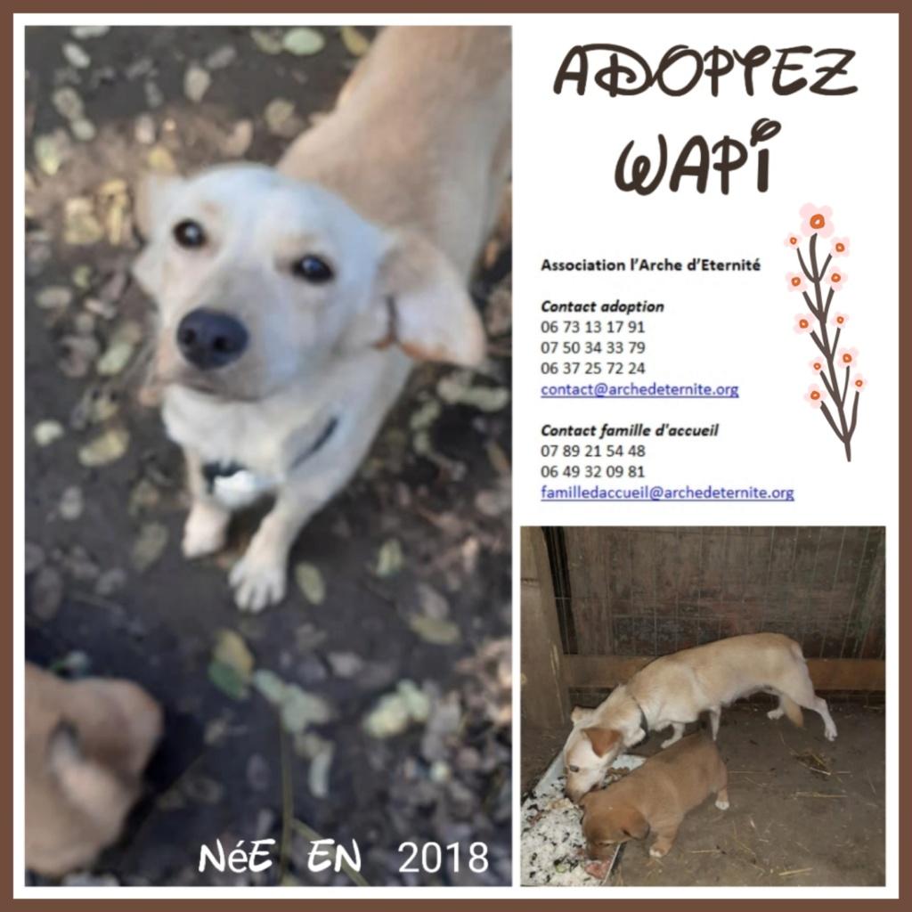 wapi - WAPI petite femelle née en 2018 et son chiot - sauvés de Pallady  le 18/11/2020- parrainée par Elda -R-SOS-SC Wapi1210