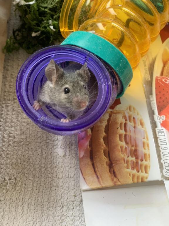 Sweet foster mice 1c4e4e10