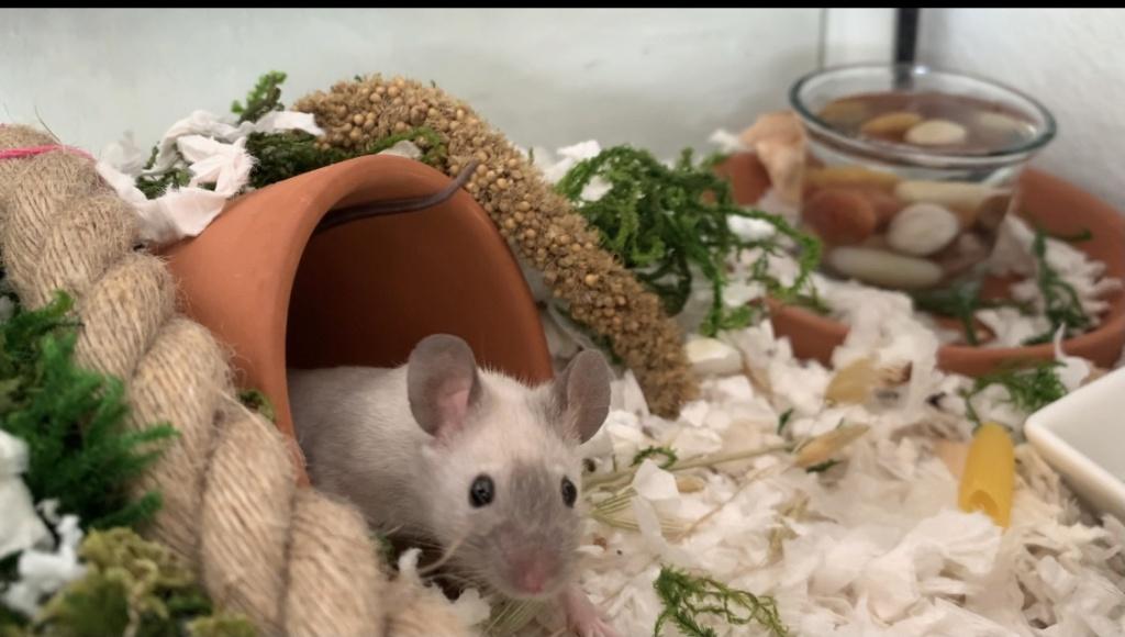 Sweet foster mice D92ba710