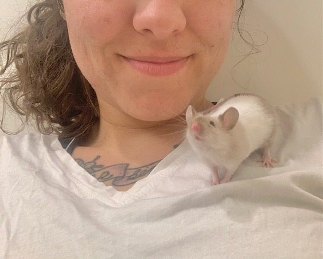 Mice for adoption in San Diego CA! Snow110