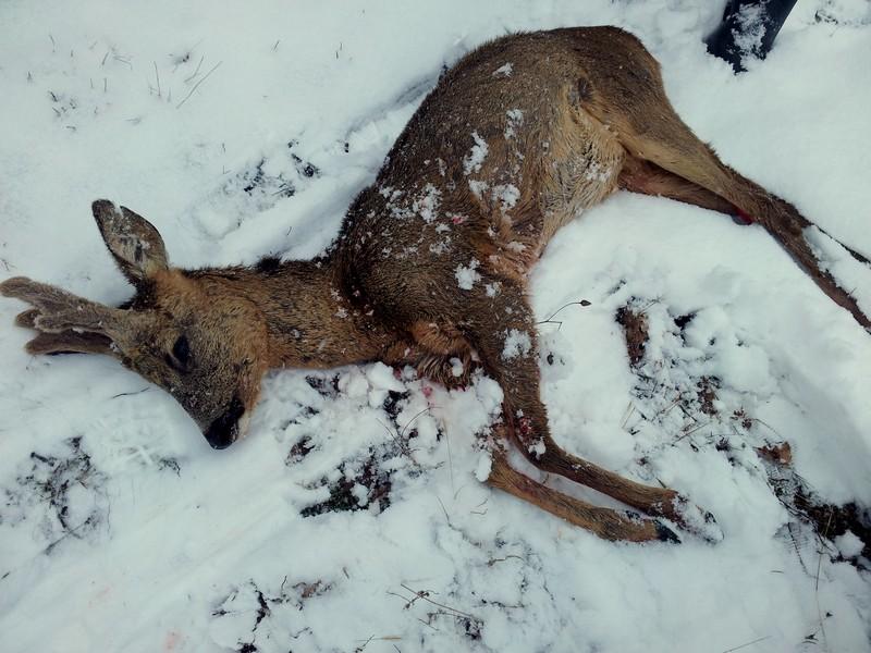 Saison de chasse au Grand Gibier 2012/2013 - Page 3 20130210