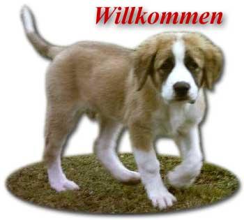 coucou Willko10