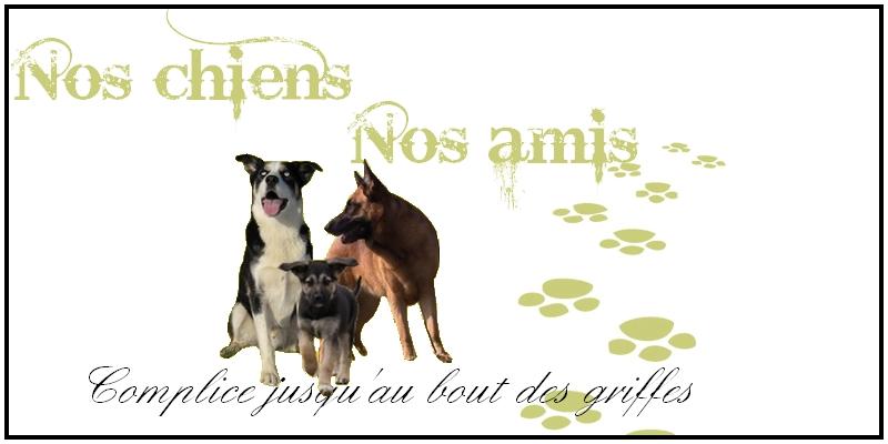 Nos chiens nos amis