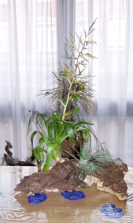 Guatemalensis Guatem10