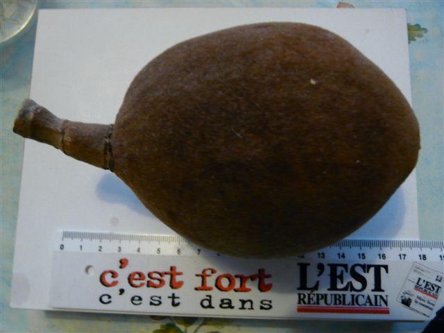 Le fruit du Baobab Fruit_10