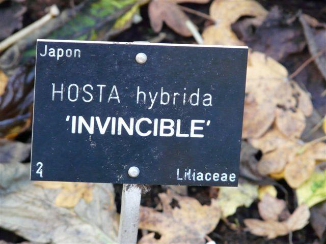 Invincible du Jardin Bota. photos du 12 Nov.08 Jardin39