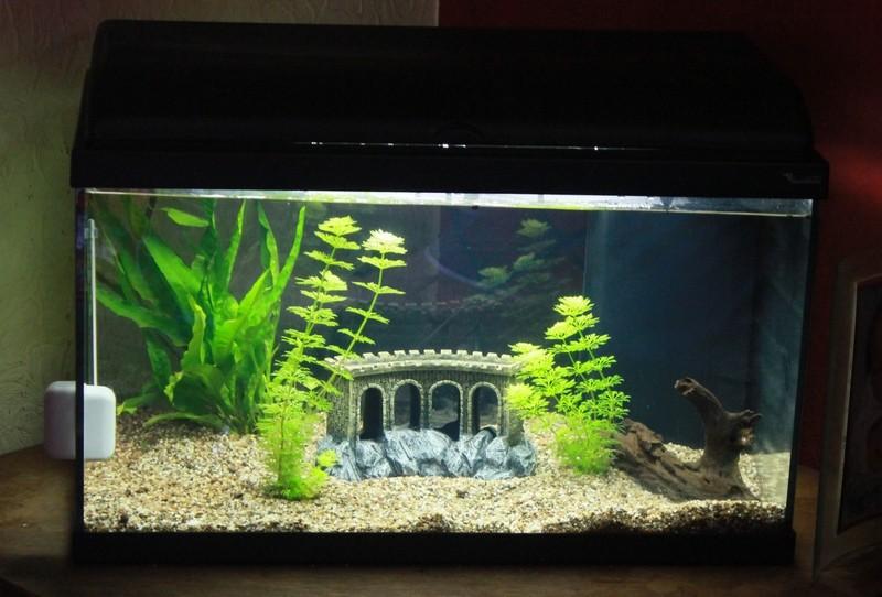 Aquatlantis aquadream 60: mon premier aquarium 08-08-10