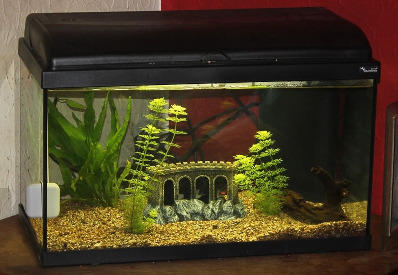 Aquatlantis aquadream 60: mon premier aquarium 08-08-11