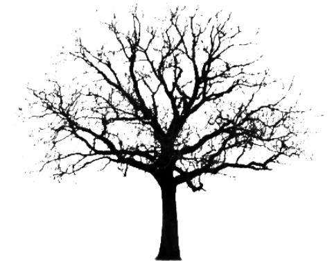 une brosse avec un arbre Arbre_10