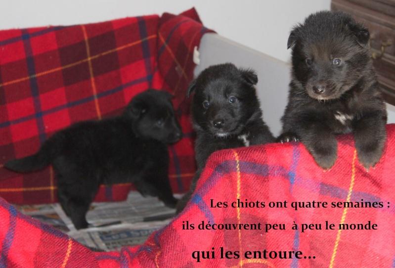 """Des """"louveteaux""""  pour Vauxane ! Img_5521"""
