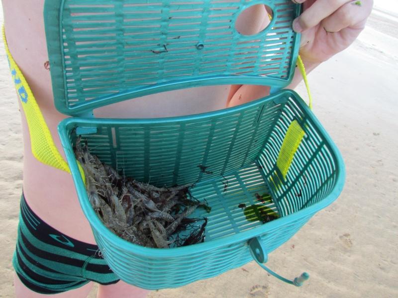 LA PECHE aux crevettes et quelle joie les aigrettes, les crabes, les mouettes  5010