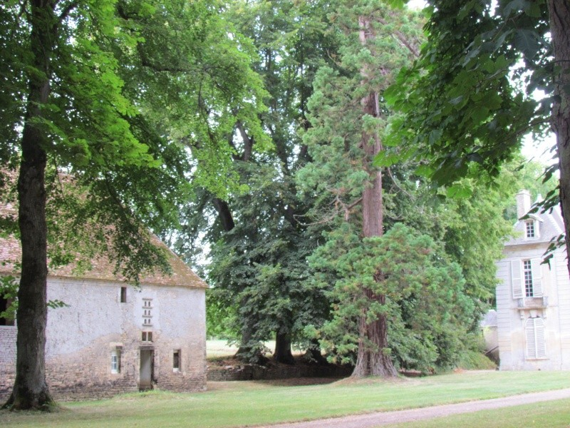 Le Château de Thaon, un petit coin de paradis Img_0081