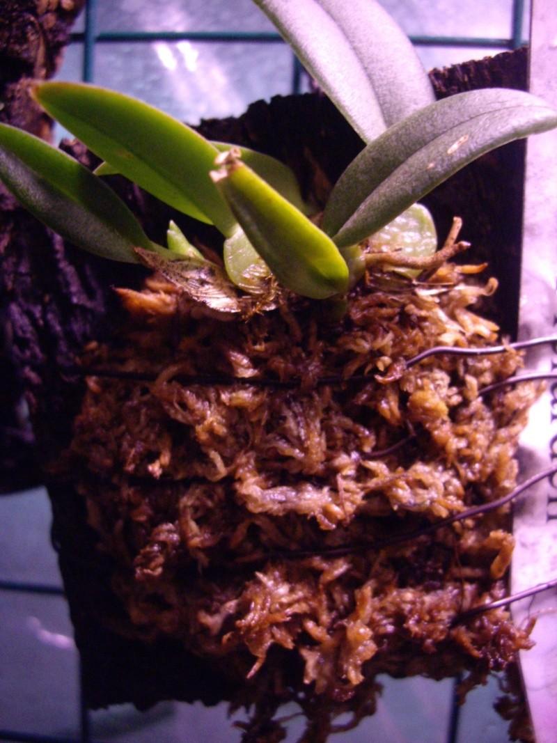 Petites folies d'Orchidays Imgp2839