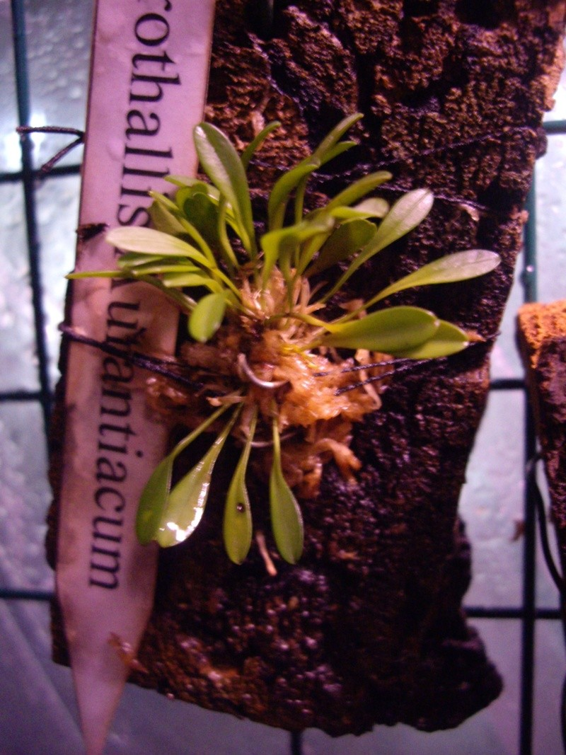 Petites folies d'Orchidays Imgp2840