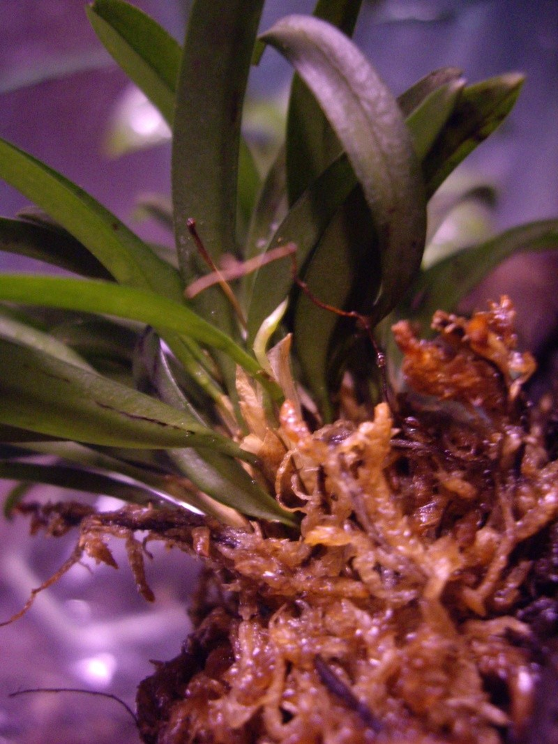 Petites folies d'Orchidays Imgp2843