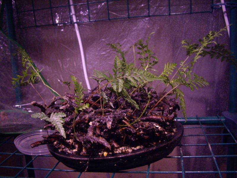 Petites folies d'Orchidays Imgp2849