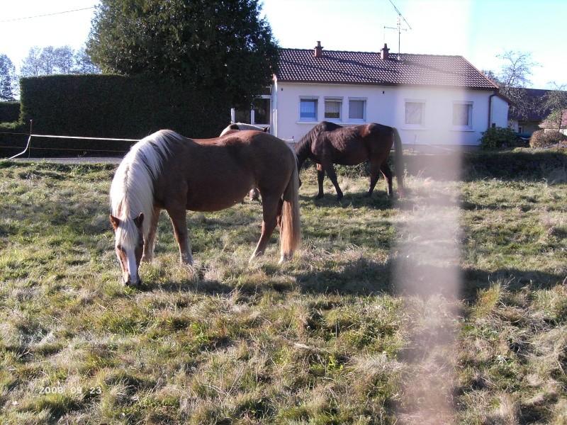TARTINE  - Poney Haflinger née en 1985 - adoptée en novembre 2008 Pict1110