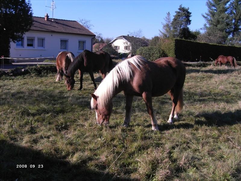 TARTINE  - Poney Haflinger née en 1985 - adoptée en novembre 2008 Pict1111