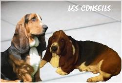 créer un forum : basset hound aventures - Portail P00010