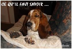 créer un forum : basset hound aventures - Portail P000610