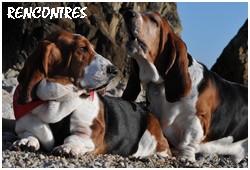 créer un forum : basset hound aventures - Portail P000910