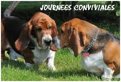 créer un forum : basset hound aventures - Portail P001010