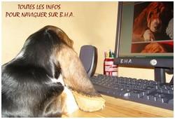 créer un forum : basset hound aventures - Portail P00110