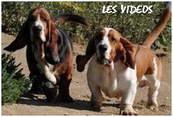 créer un forum : basset hound aventures - Portail P00510