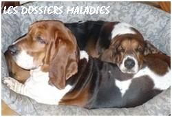 créer un forum : basset hound aventures - Portail P00710
