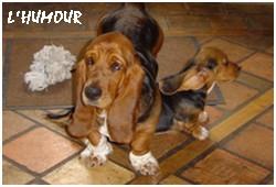 créer un forum : basset hound aventures - Portail P01210