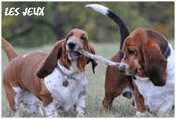 créer un forum : basset hound aventures - Portail P01310
