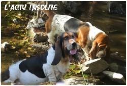 créer un forum : basset hound aventures - Portail P01410