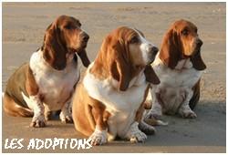 créer un forum : basset hound aventures - Portail P01510